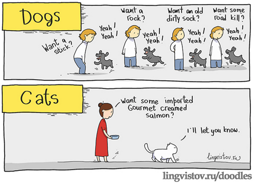 Dogs vs Cats Dogs vs Cats Nature Humor