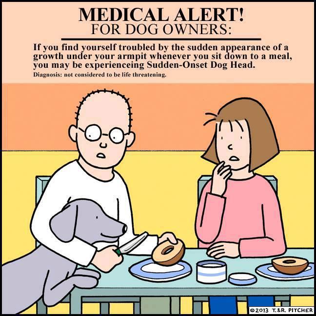 Medical alert for dog owners.jpg