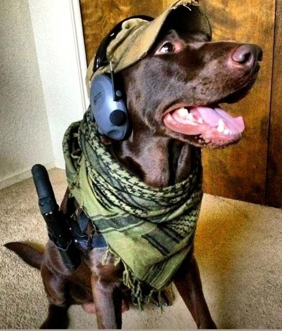 tactical dog Military dogs