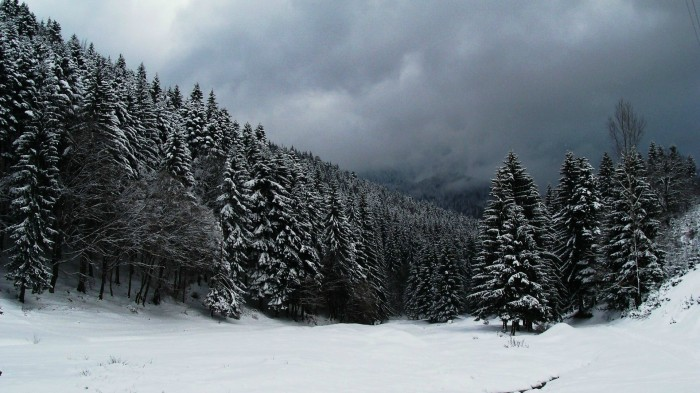 Snow Capped Forest.jpg