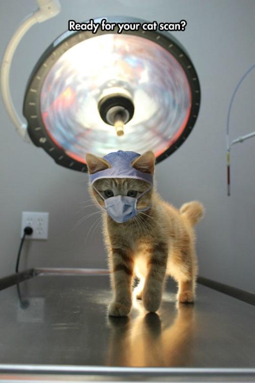 Doctor Kitty.jpg
