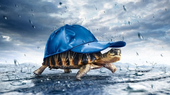Happiness is a turtle with a hat.jpg