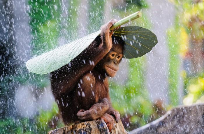 Safe from the rain.jpg