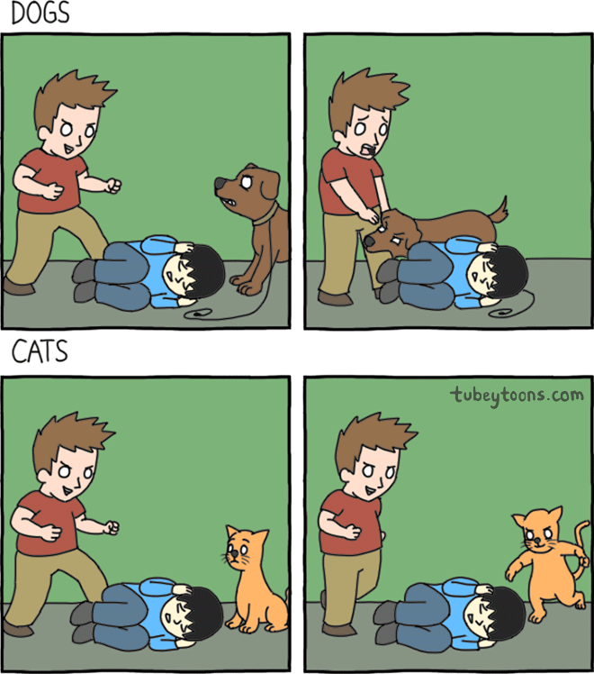 Dogs vs Cats.png