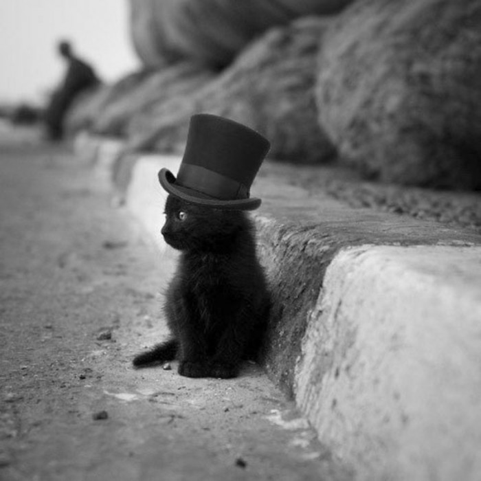 Top Hat Cat.jpg
