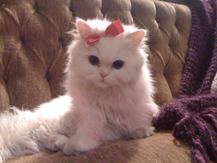 cute white kitten.jpg