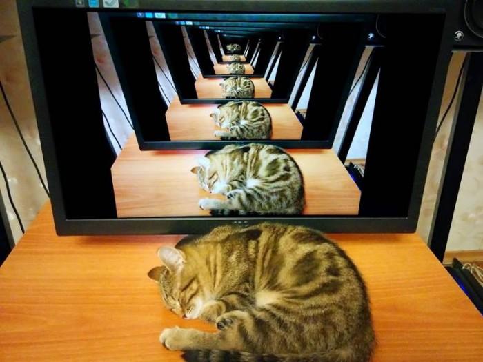 Infinity cat.jpg