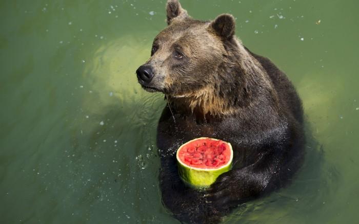 Fruit Bear.jpg
