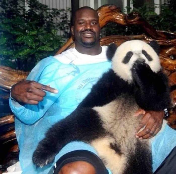 Panda Shaq.jpg