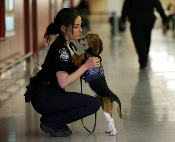 Puppy Police.jpg