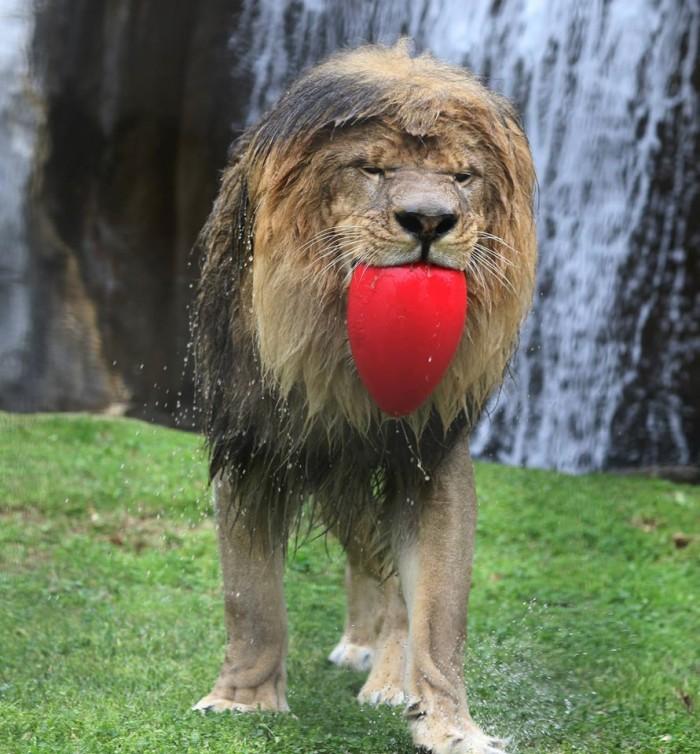 Wet Lion.jpg