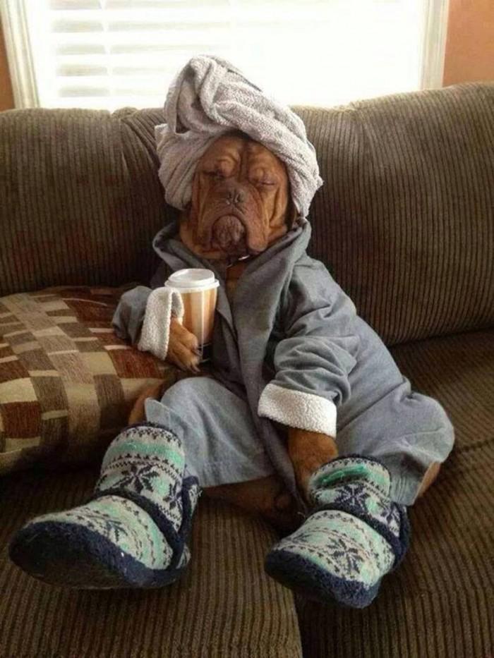 morning dog 700x933 morning dog