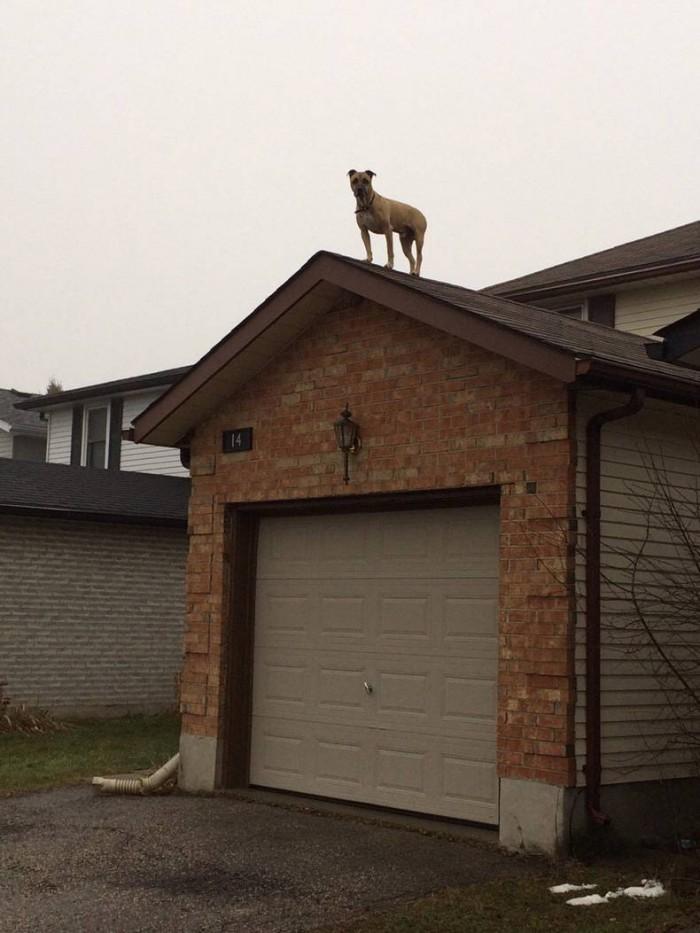 roof dog 700x933 roof dog