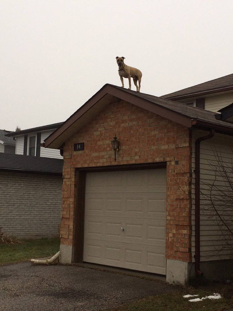 roof dog.jpg