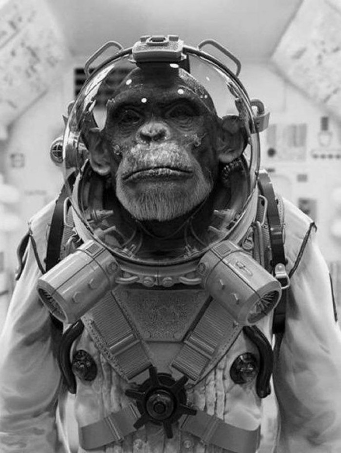 Bad Ass Space Monkey