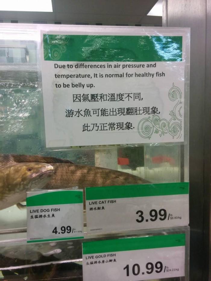 Healthy Fish.jpg