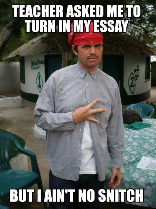 turn in my essay Turn in my essay Gangsta funny ese