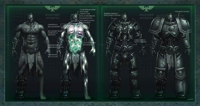 Anatomie Astartes.jpg
