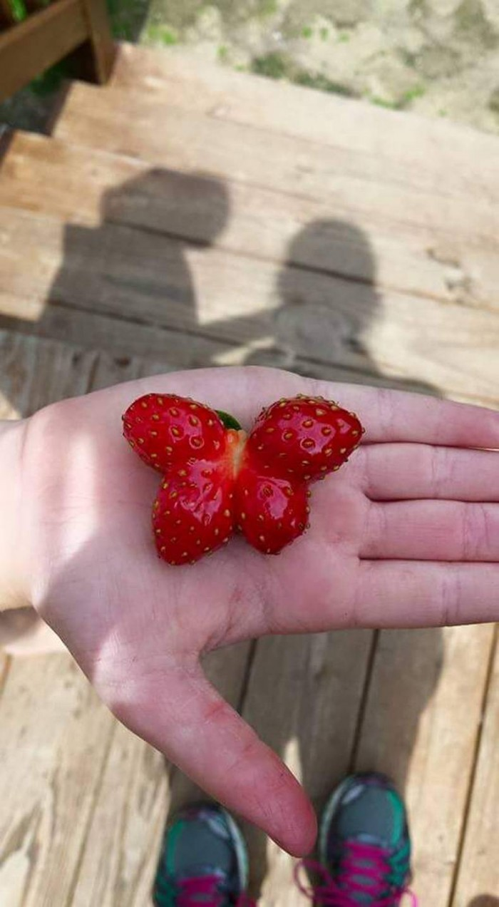 Butterfly Strawberry