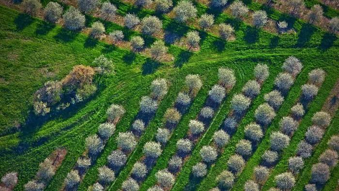 Cherry Orchards.jpg