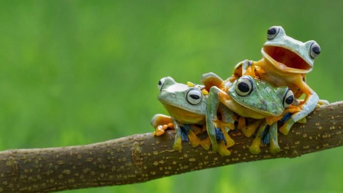 Frog Line Up.jpg