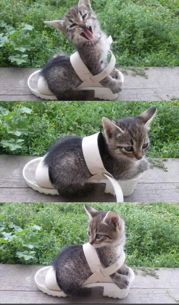 kitten shoe.jpg