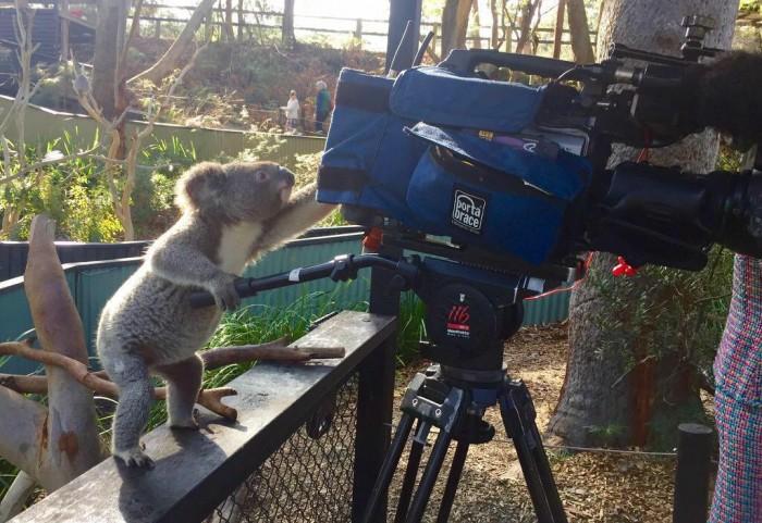 Animals Film Crew.jpg