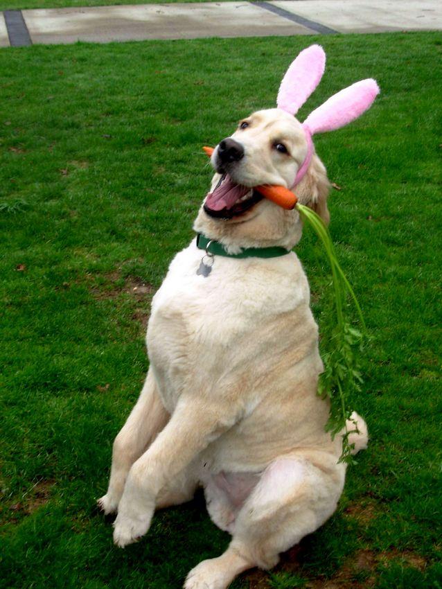 Easter Dog.jpg