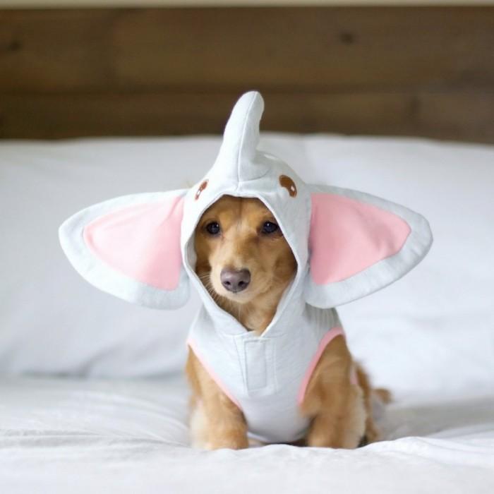Elephant Puppy.jpg