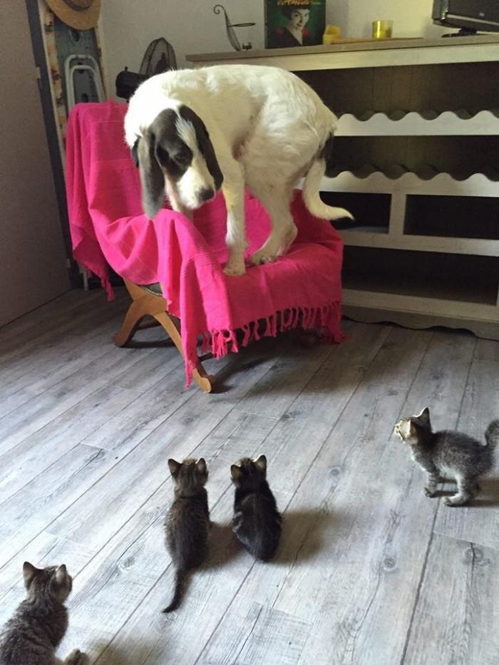 Frady Cat.jpg