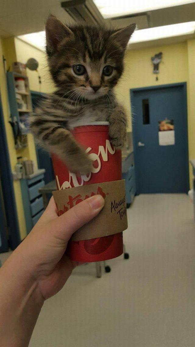 Kitten Cup.jpg