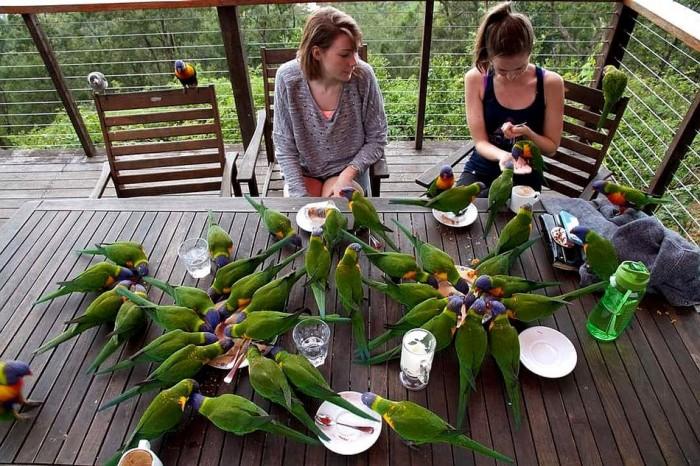 Parrot Dinner.jpg