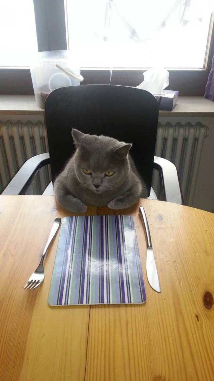 angry dinner cat.jpg
