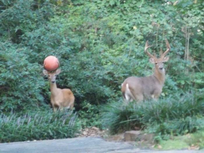 sports deer.jpg