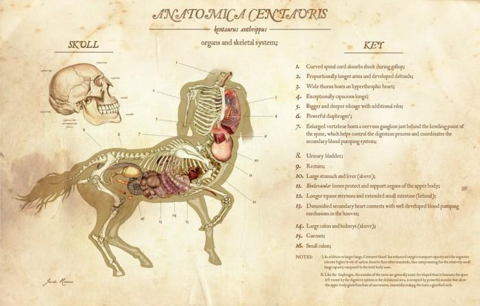Anatomica Centauris.jpg