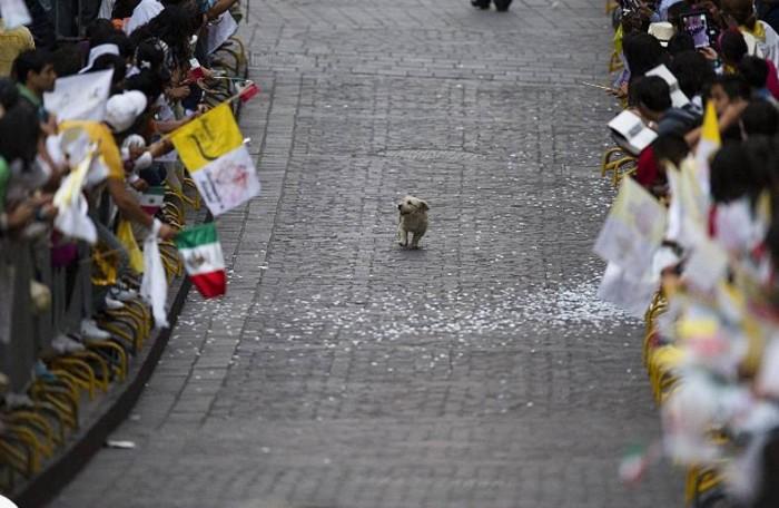 Magical Parade.jpg