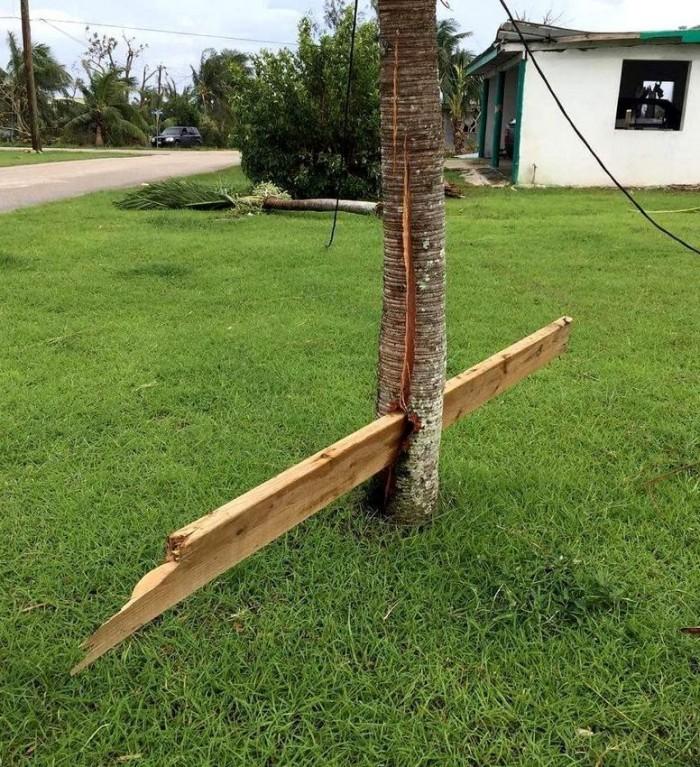 Tornado plank.jpg