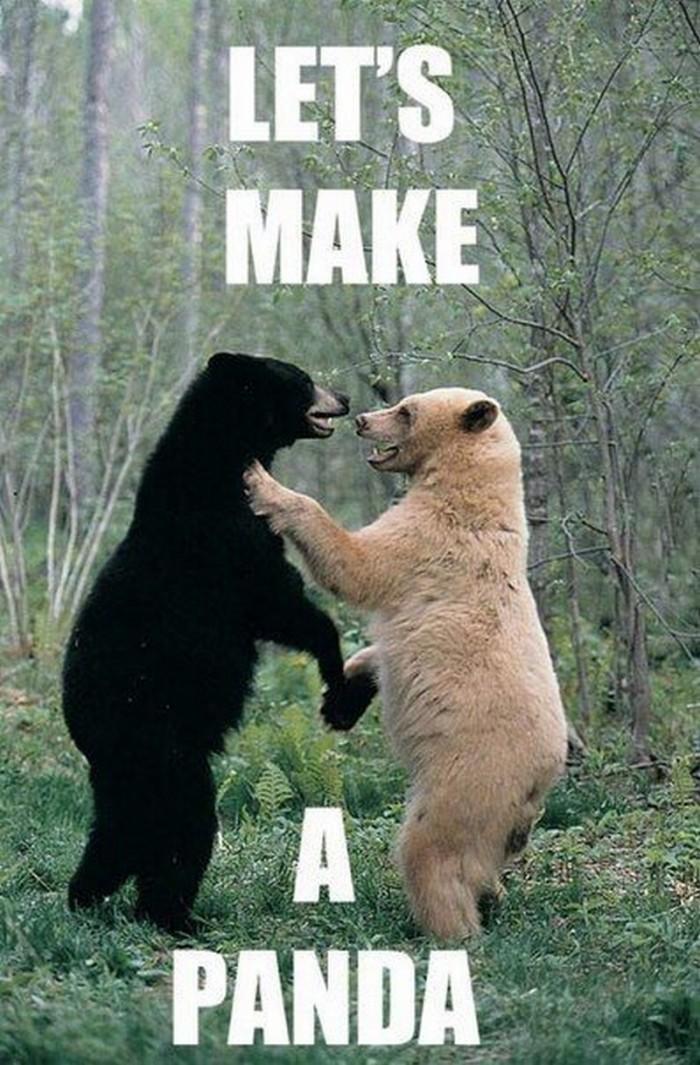 let's make a panda.jpg