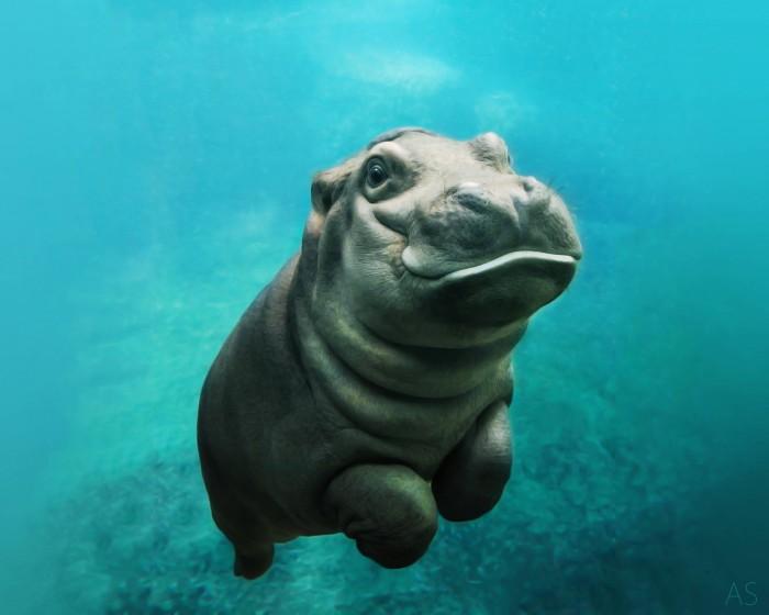 Baby Hippo.jpg