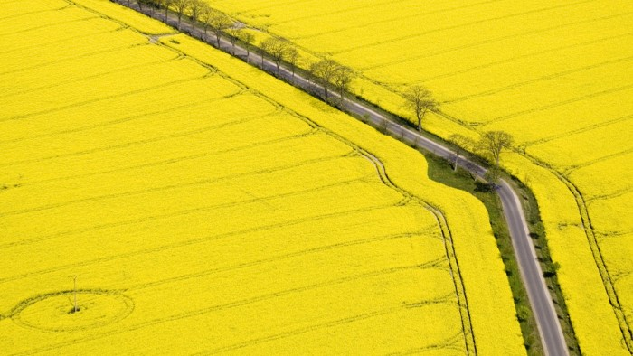 Yellow Fields of Canola Blooms along old highway.jpg