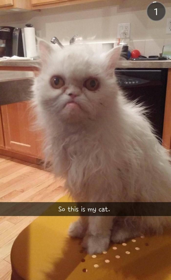 an ugly cat.jpg