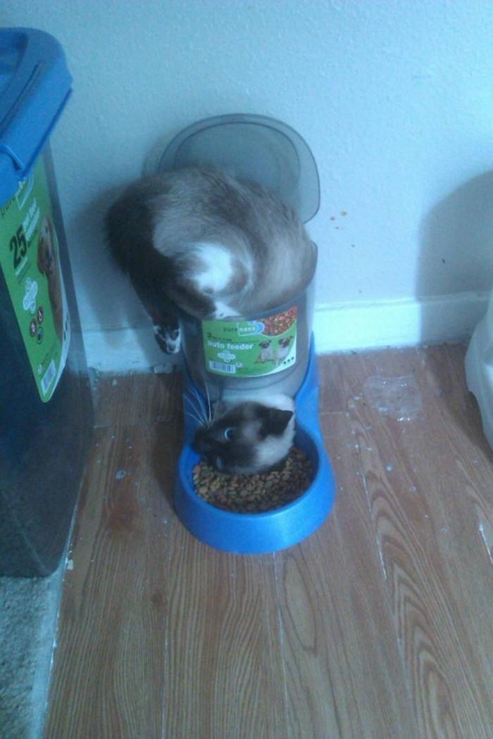 auto kitten feeder.jpg