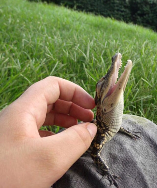 Gator Pets.jpg