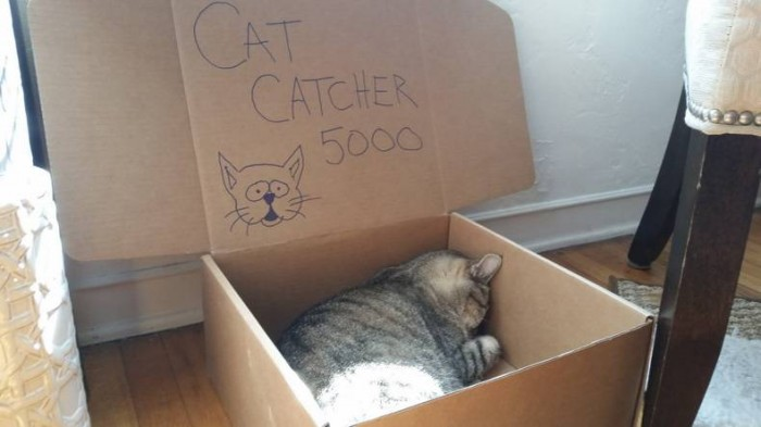 cat catcher 5000.jpg