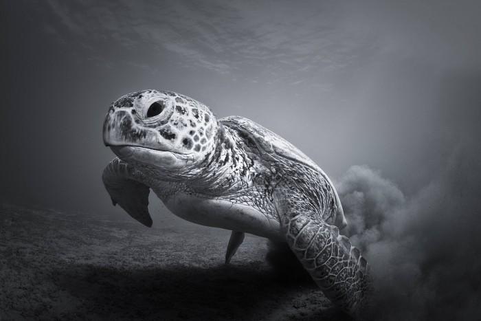 Awesome Turtle.jpg