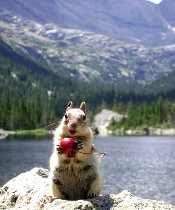 Cherry Squirrel.jpg