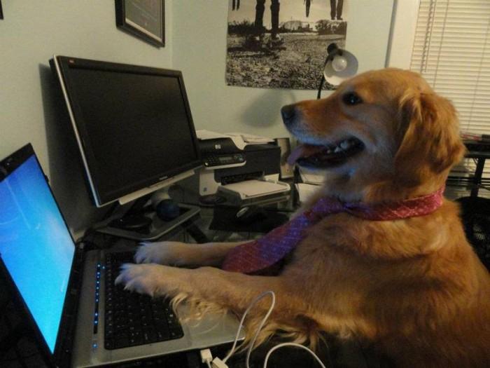 Developer Dog.jpg