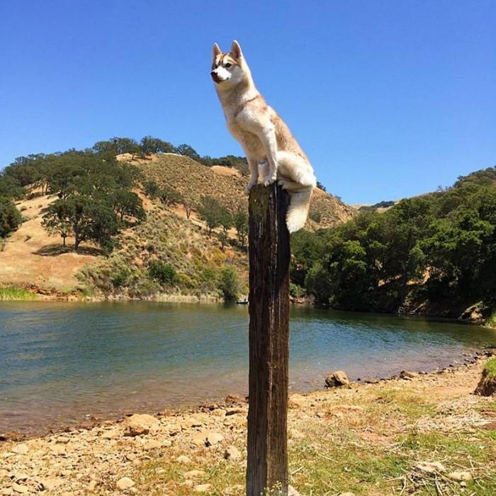 Pole Dog.jpg