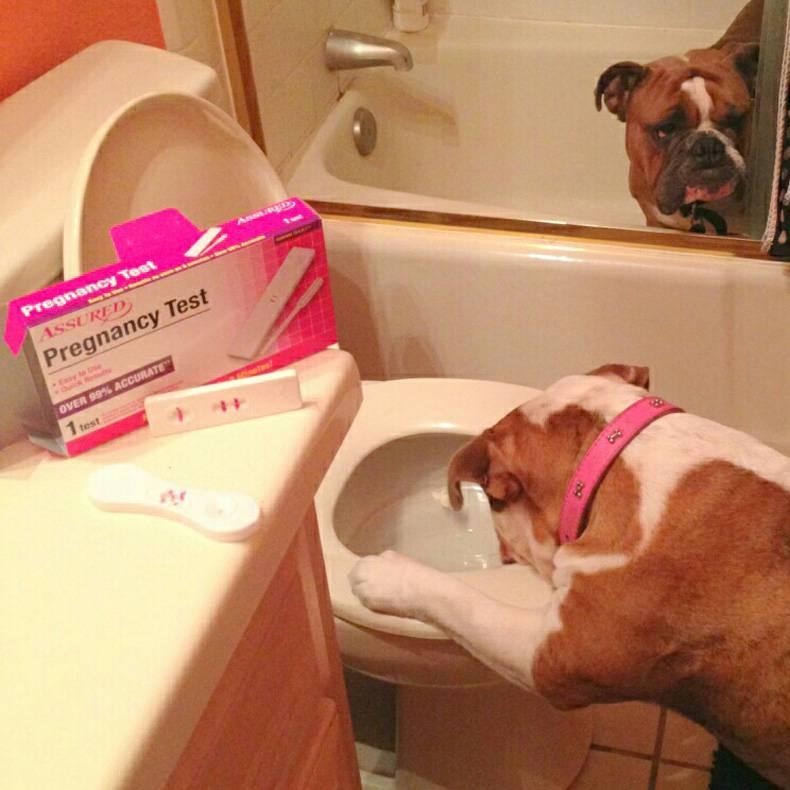 Pregnant Dog.jpg