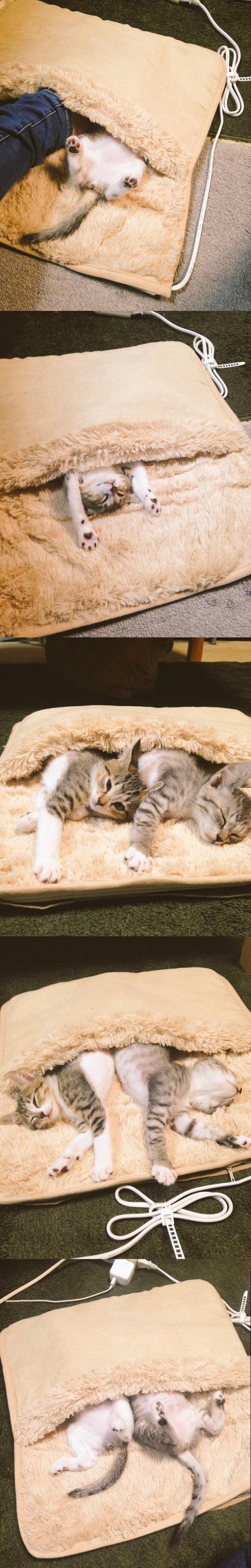 cat warmer.jpg